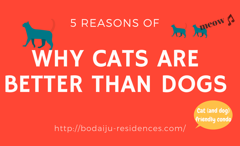 Cat or Dog? -5 Reasons of Why Cats Are Better Than Dogs